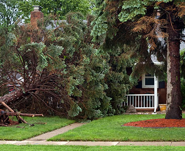 Storm damage caused a tree to fall on a house in need of repairs by Xtreme Home Improvement